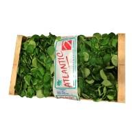 Mâche coquille colis bois /1kg