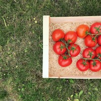 Tomate Grappe / 1kg